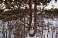 Природа поселения